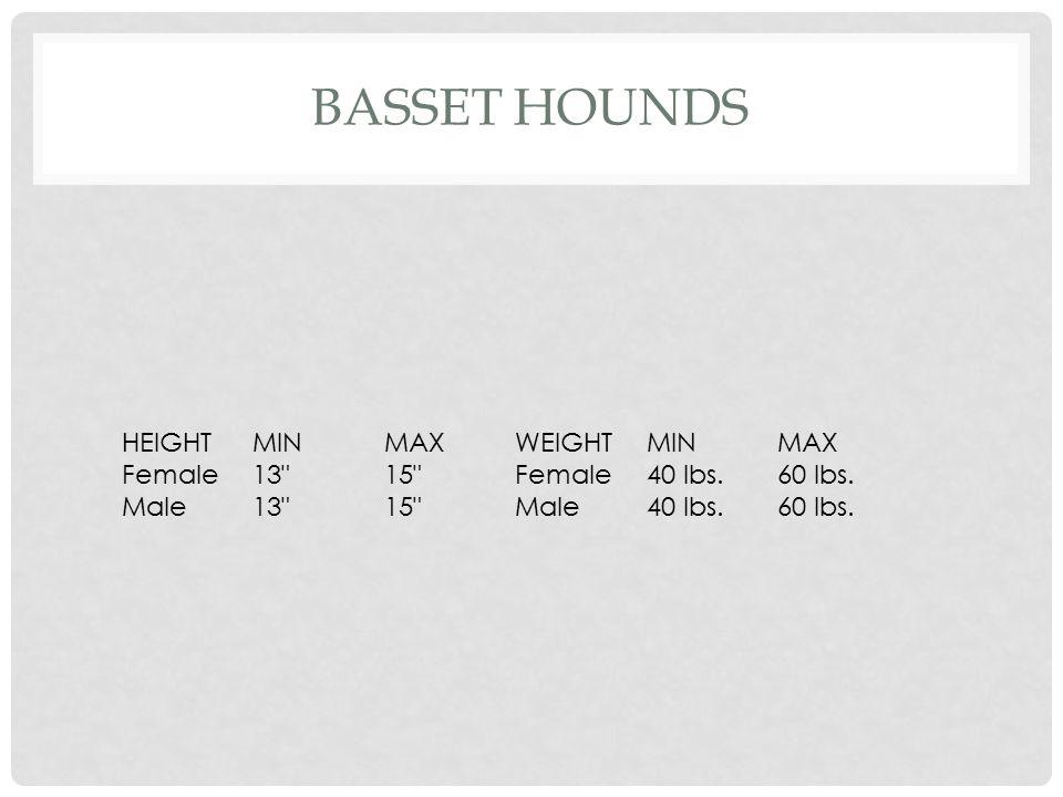 IRISH SETTER HEIGHTMINMAXWEIGHTMINMAX Female24 25 Female59 lbs.67 lbs. Male25 26 Male59 lbs.67 lbs.