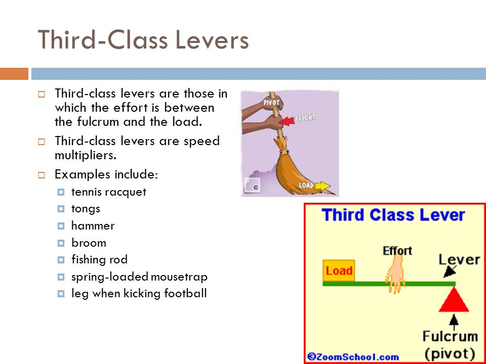Third-class levers in your body Bend your arm  The pivot is at the elbow and the forearm acts as the lever arm.