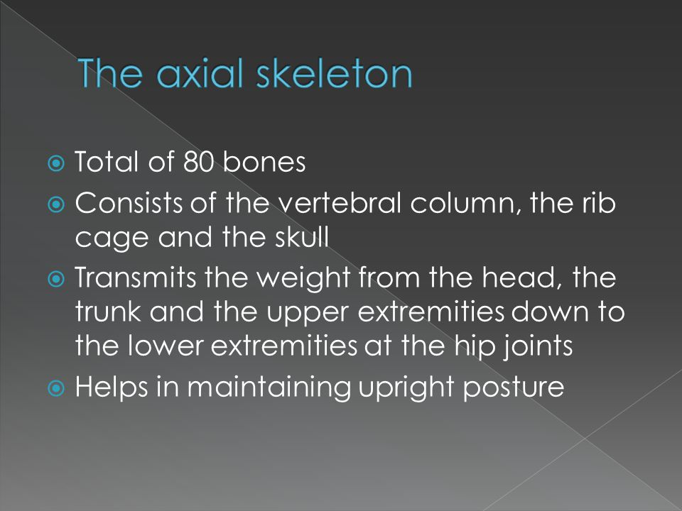  Total of 80 bones  Consists of the vertebral column, the rib cage and the skull  Transmits the weight from the head, the trunk and the upper extre