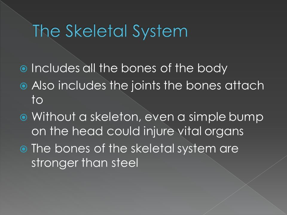  This system has 2 distinctive parts › Axial skeleton › Appendicular skeleton  Let's see what they're all about!