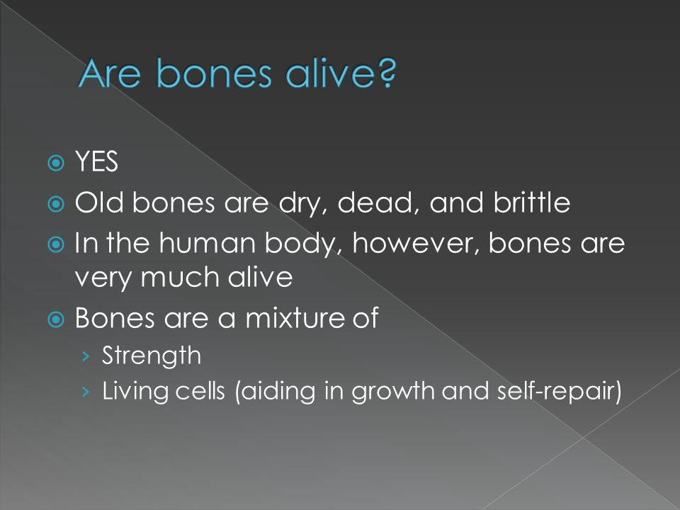 YES  Old bones are dry, dead, and brittle  In the human body, however, bones are very much alive  Bones are a mixture of › Strength › Living cell