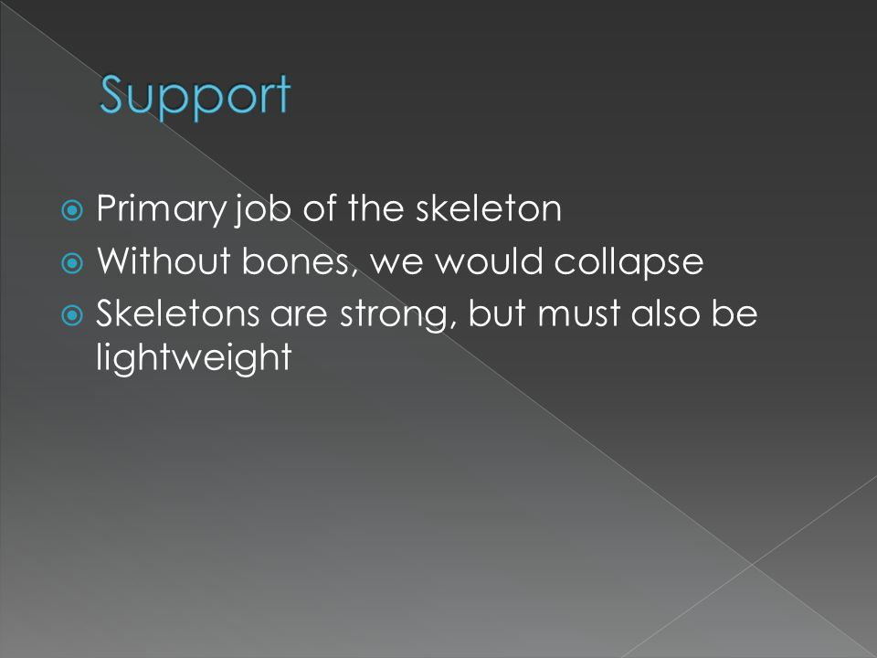 Skeleton protects all internal organs and fragile tissues (brain, eyes, heart, lungs, spinal cord)  Cranium protects the brain and eyes  Ribs protect heart and lungs  Vertebrae protects spinal cord