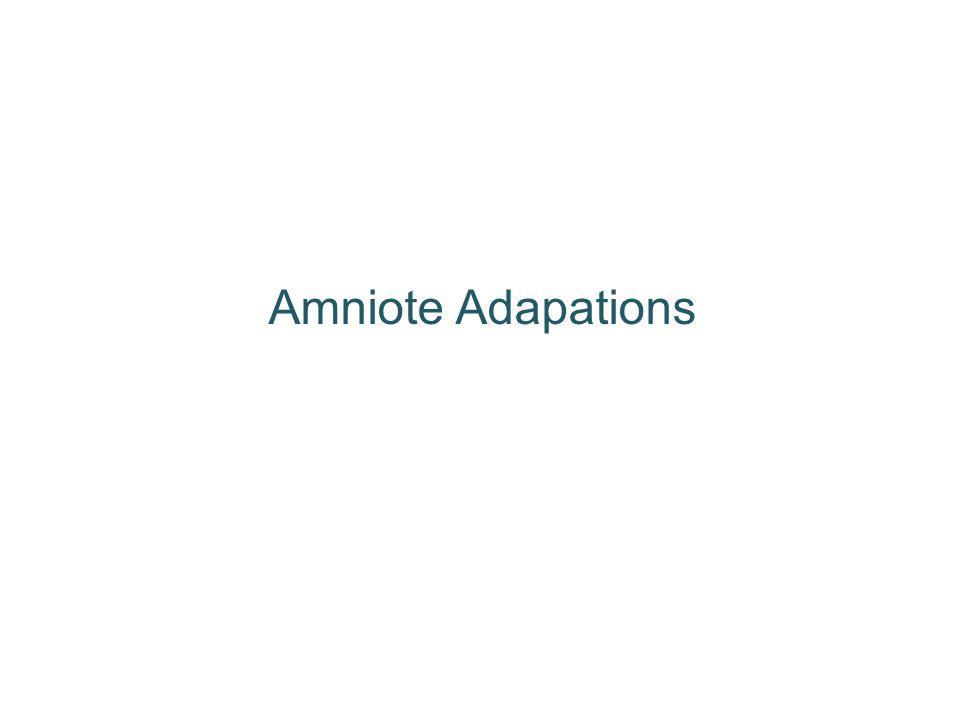 Amniote Adapations