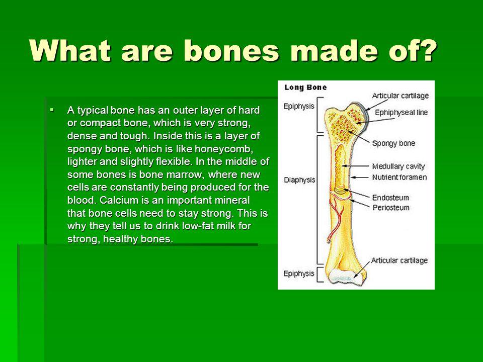 How do bones break and heal.
