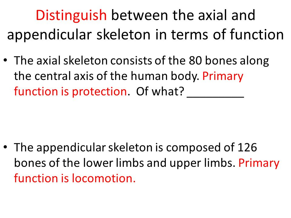 Distinguish between the axial and appendicular skeleton in terms of function The axial skeleton consists of the 80 bones along the central axis of the