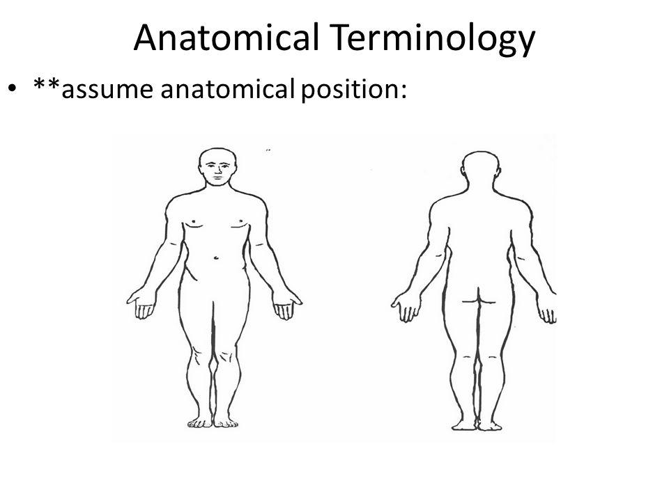 Anatomical Terminology **assume anatomical position: