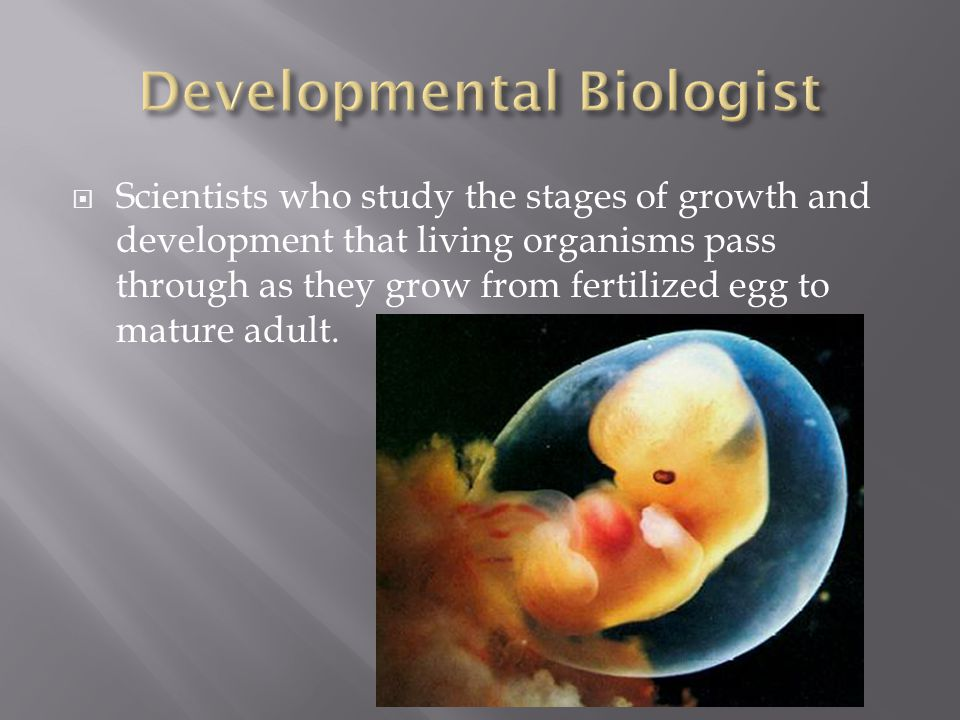  Scientists who study the stages of growth and development that living organisms pass through as they grow from fertilized egg to mature adult.
