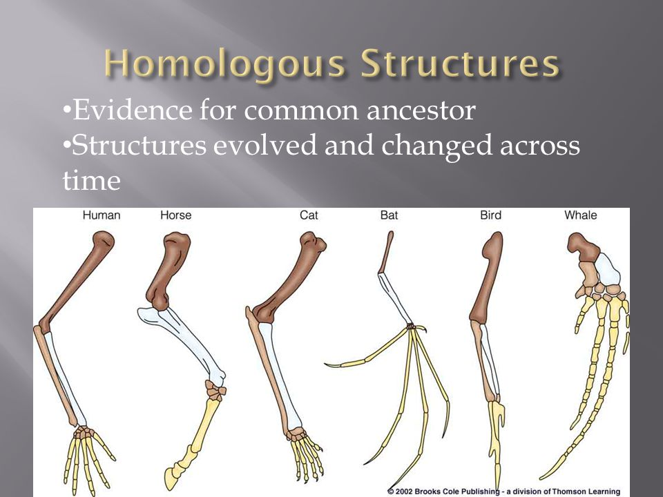 Evidence for common ancestor Structures evolved and changed across time