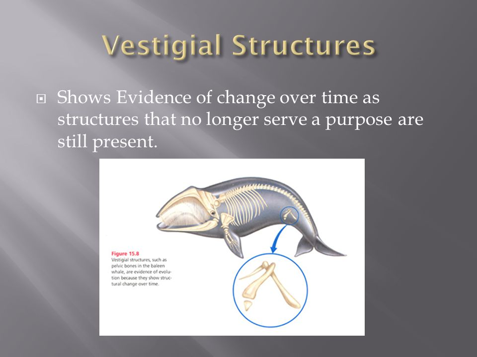  Shows Evidence of change over time as structures that no longer serve a purpose are still present.
