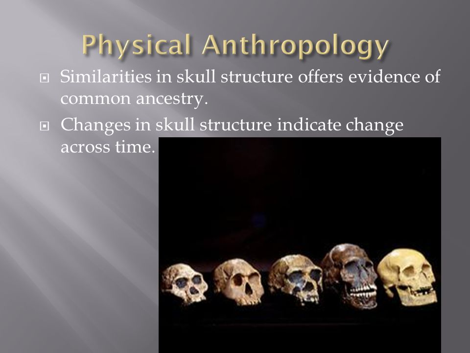  Similarities in skull structure offers evidence of common ancestry.