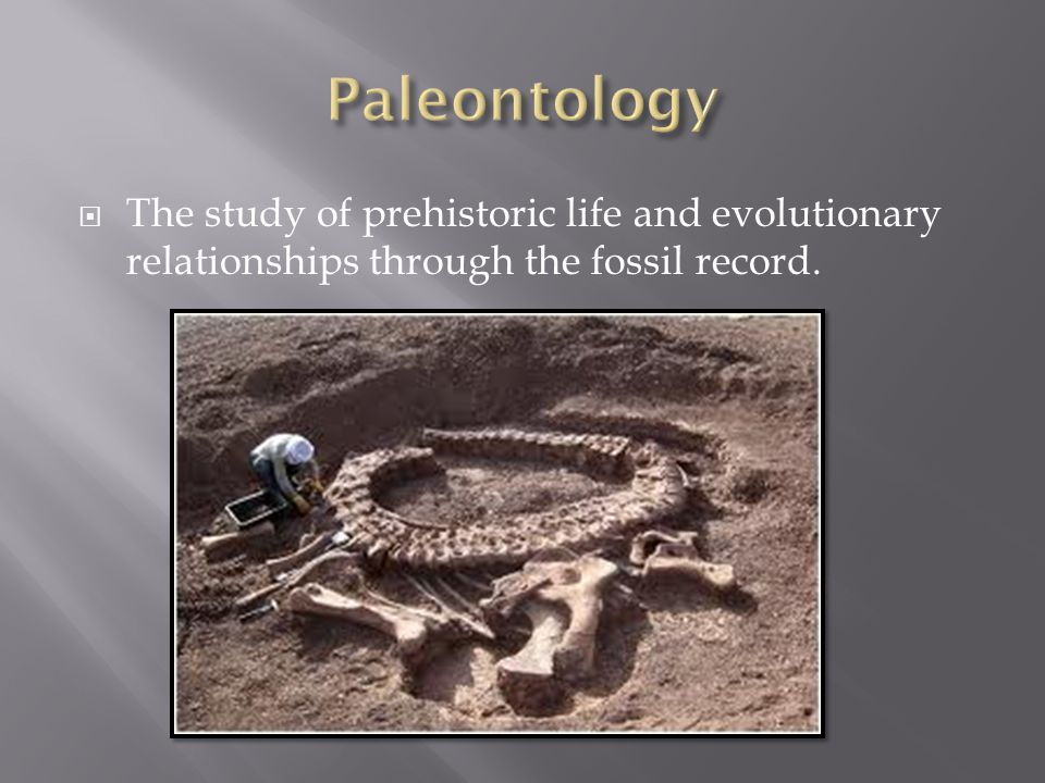  The study of prehistoric life and evolutionary relationships through the fossil record.