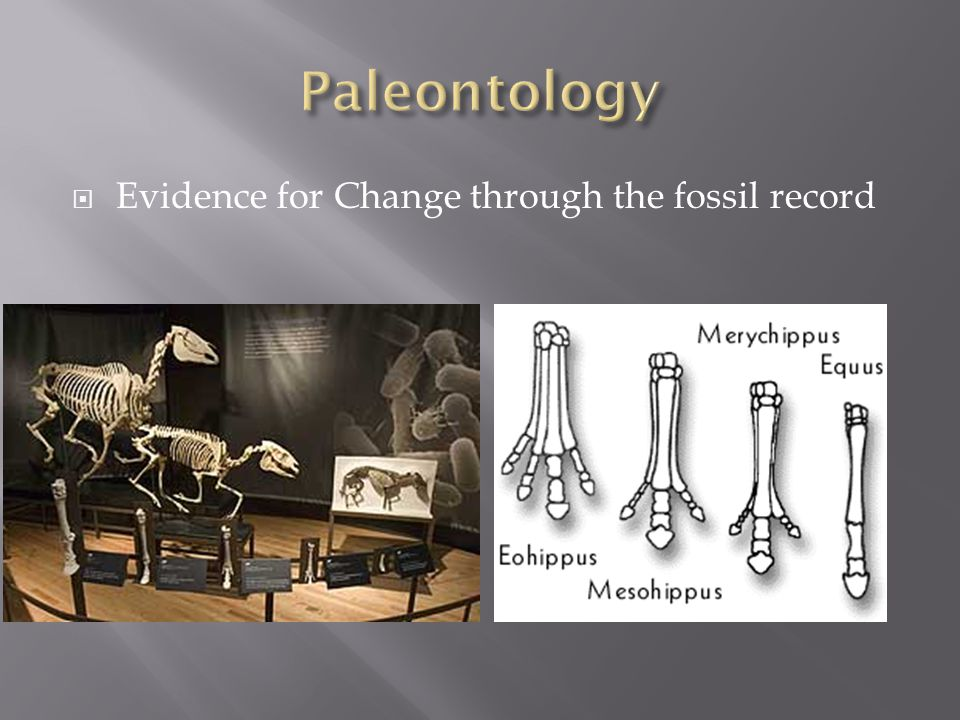  Evidence for Change through the fossil record
