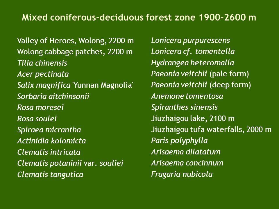 Altitudinal transect of vegetation and flora 1900-2600 m Mixed deciduous – coniferous forest 2600-3000 m (-3500 m)Coniferous forest 3500-3800 m Sichuan – Qinghai Tibetan Plateau 3200-3900 mSub-alpine zone 3900-4200+ mAlpine vegetation