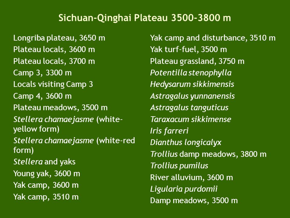 Coniferous (Abies-Picea) forest zone 2600-3000 m (-3500 m) Songpan City Wall, 2800 m Songpan Gate, 2800 m Songpan fruit and vegetable dealer Songpan vegetable shop Songpan meat shop Tebiit Mountion Man Restaurant, Yellow Dragon Monastery, Huanglongsi, 3500 m Saxifraga cernua Huanglongsi tufa pools and Min-Shan range, 3500 m