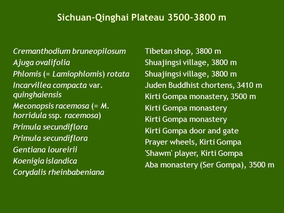 Sichuan-Qinghai Plateau 3500-3800 m Longriba plateau, 3650 m Plateau locals, 3600 m Plateau locals, 3700 m Camp 3, 3300 m Locals visiting Camp 3 Camp 4, 3600 m Plateau meadows, 3500 m Stellera chamaejasme (white- yellow form) Stellera chamaejasme (white-red form) Stellera and yaks Young yak, 3600 m Yak camp, 3600 m Yak camp, 3510 m Yak camp and disturbance, 3510 m Yak turf-fuel, 3500 m Plateau grassland, 3750 m Potentilla stenophylla Hedysarum sikkimensis Astragalus yunnanensis Astragalus tanguticus Taraxacum sikkimense Iris farreri Dianthus longicalyx Trollius damp meadows, 3800 m Trollius pumilus River alluvium, 3600 m Ligularia purdomii Damp meadows, 3500 m