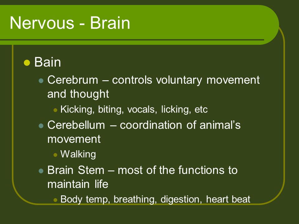 Nervous - Brain Bain Cerebrum – controls voluntary movement and thought Kicking, biting, vocals, licking, etc Cerebellum – coordination of animal's mo