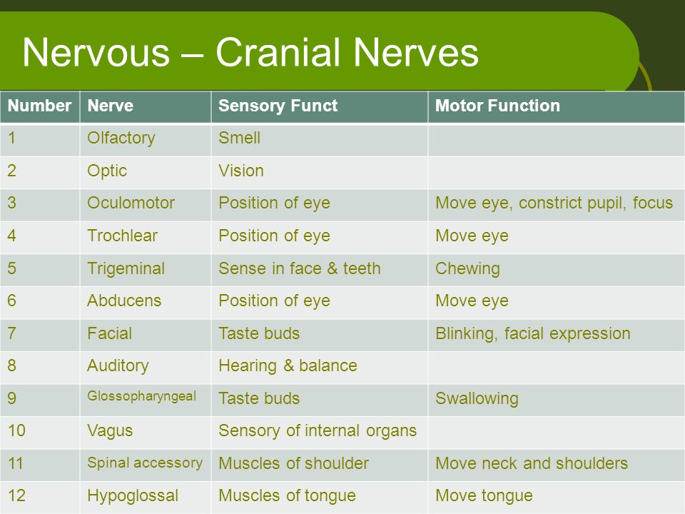 Nervous – Cranial Nerves NumberNerveSensory FunctMotor Function 1OlfactorySmell 2OpticVision 3OculomotorPosition of eyeMove eye, constrict pupil, focu