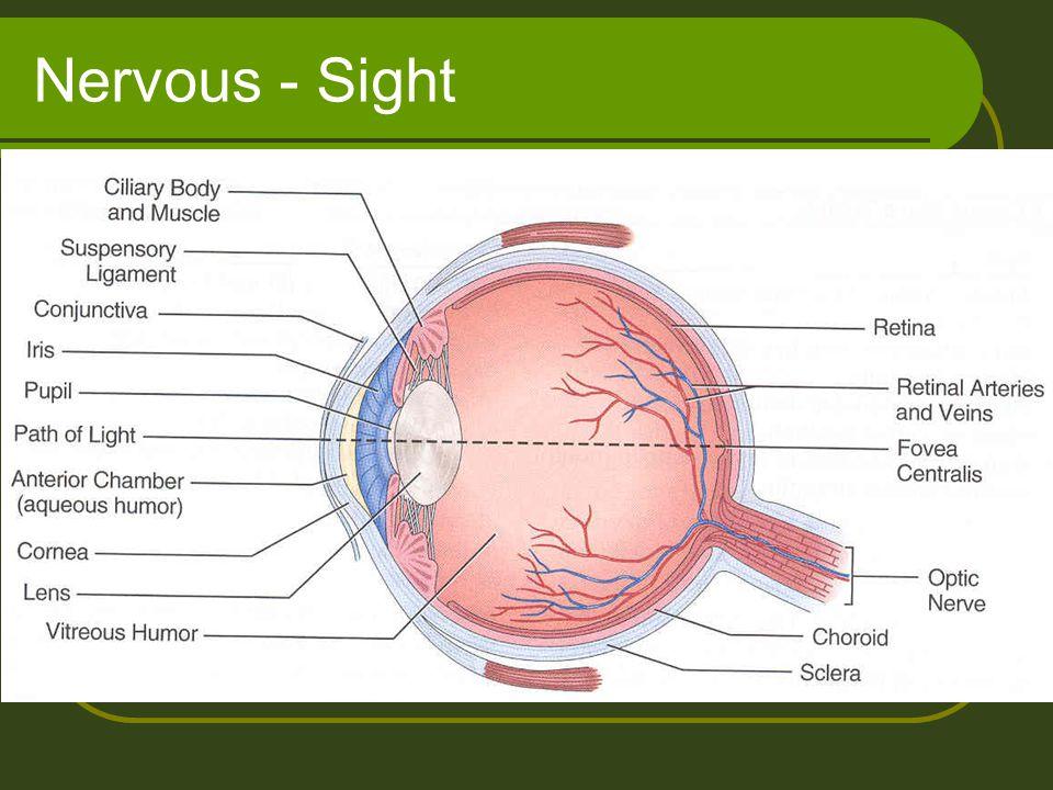 Nervous - Sight