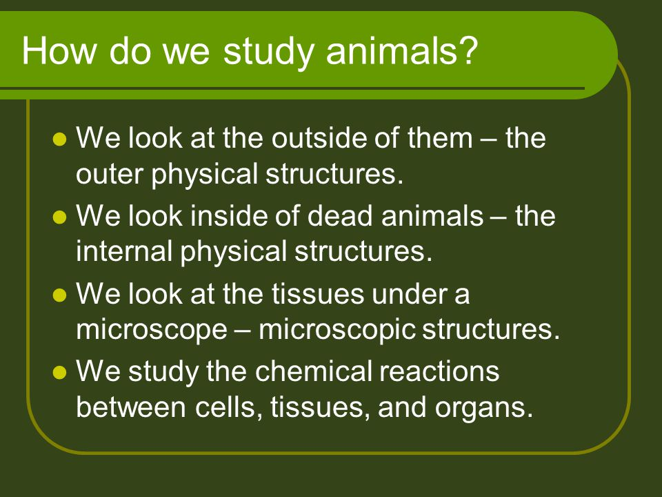 How do we study animals? We look at the outside of them – the outer physical structures. We look inside of dead animals – the internal physical struct