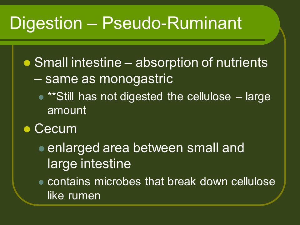 Digestion – Pseudo-Ruminant Small intestine – absorption of nutrients – same as monogastric **Still has not digested the cellulose – large amount Cecu