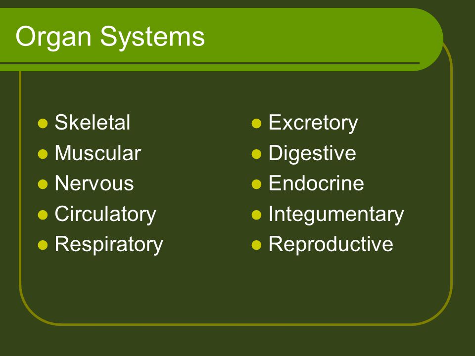 Organ Systems Skeletal Muscular Nervous Circulatory Respiratory Excretory Digestive Endocrine Integumentary Reproductive