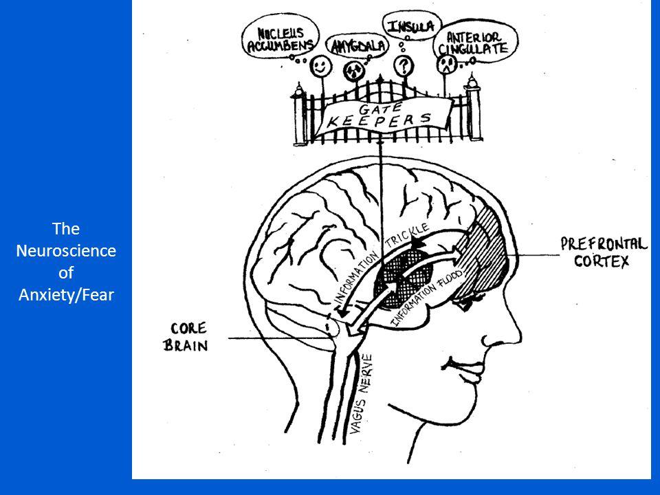 The Neuroscience of Anxiety/Fear