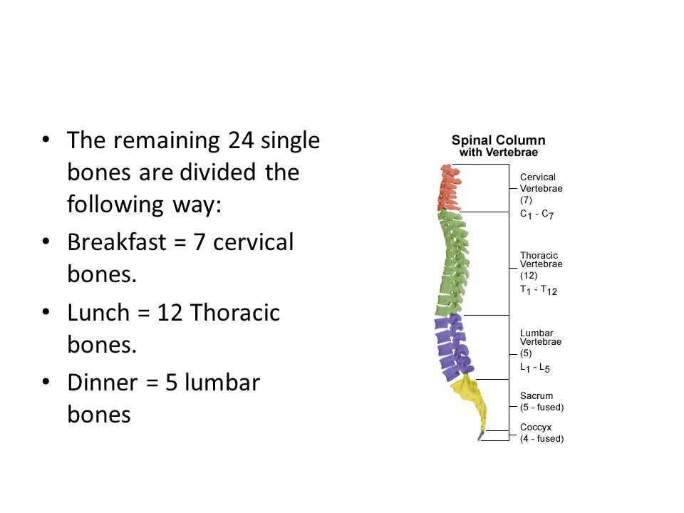 The remaining 24 single bones are divided the following way: Breakfast = 7 cervical bones. Lunch = 12 Thoracic bones. Dinner = 5 lumbar bones