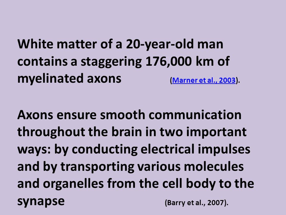 White matter of a 20-year-old man contains a staggering 176,000 km of myelinated axons (Marner et al., 2003).Marner et al., 2003 Axons ensure smooth communication throughout the brain in two important ways: by conducting electrical impulses and by transporting various molecules and organelles from the cell body to the synapse (Barry et al., 2007).