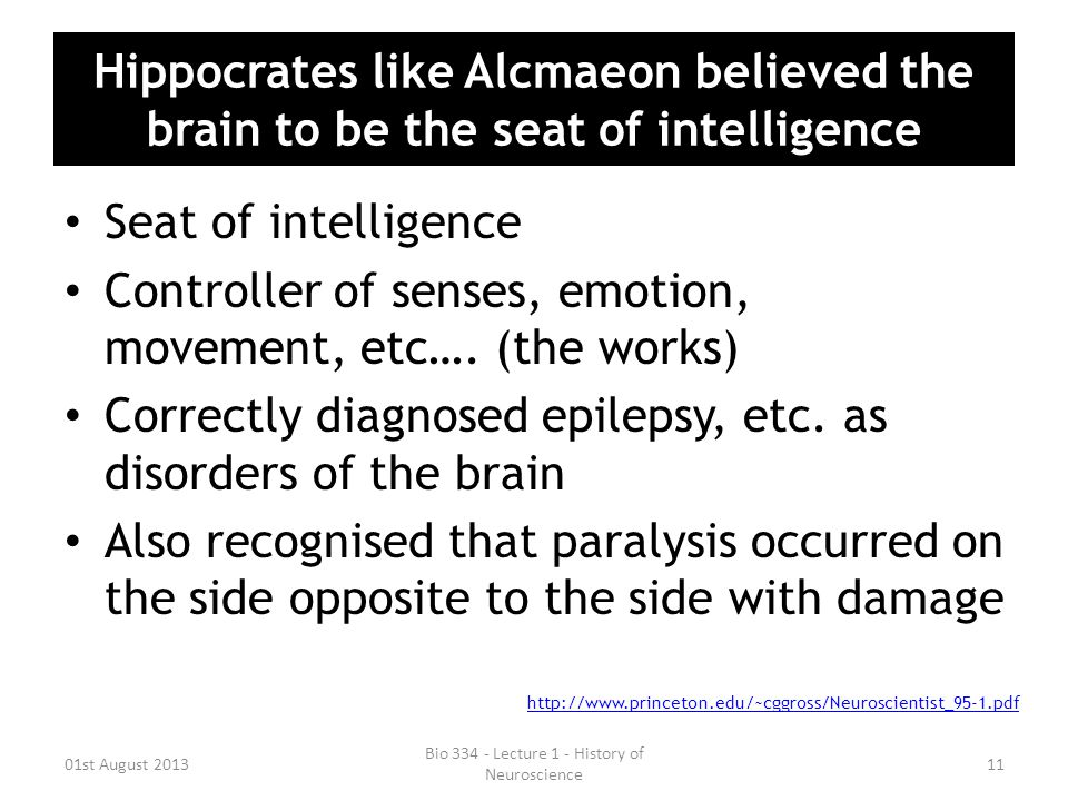 Hippocrates like Alcmaeon believed the brain to be the seat of intelligence Seat of intelligence Controller of senses, emotion, movement, etc…. (the w