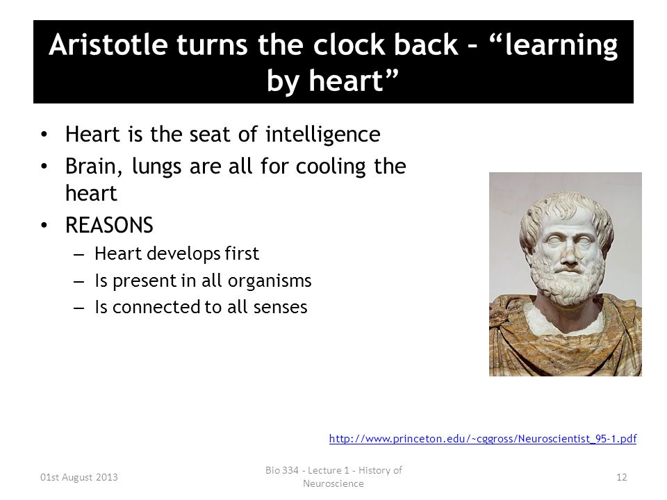 Aristotle turns the clock back – learning by heart Heart is the seat of intelligence Brain, lungs are all for cooling the heart REASONS – Heart develops first – Is present in all organisms – Is connected to all senses 01st August 2013 Bio 334 - Lecture 1 - History of Neuroscience 12 http://www.princeton.edu/~cggross/Neuroscientist_95-1.pdf