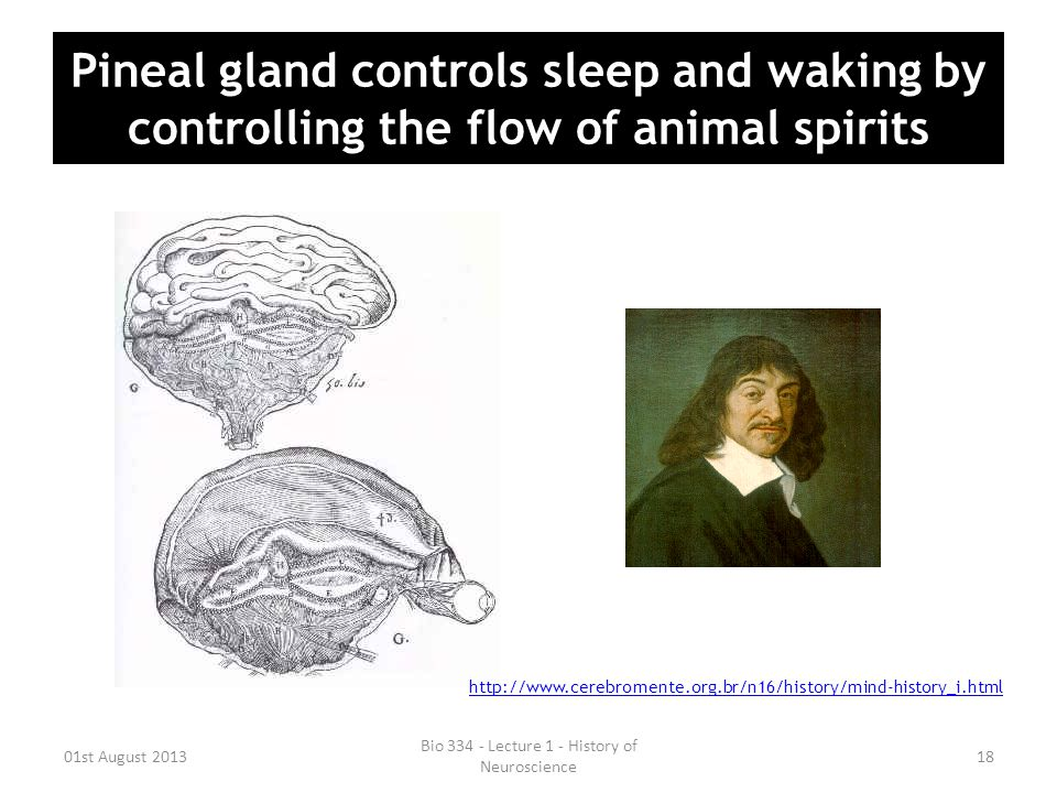 Pineal gland controls sleep and waking by controlling the flow of animal spirits 01st August 2013 Bio 334 - Lecture 1 - History of Neuroscience 18 htt