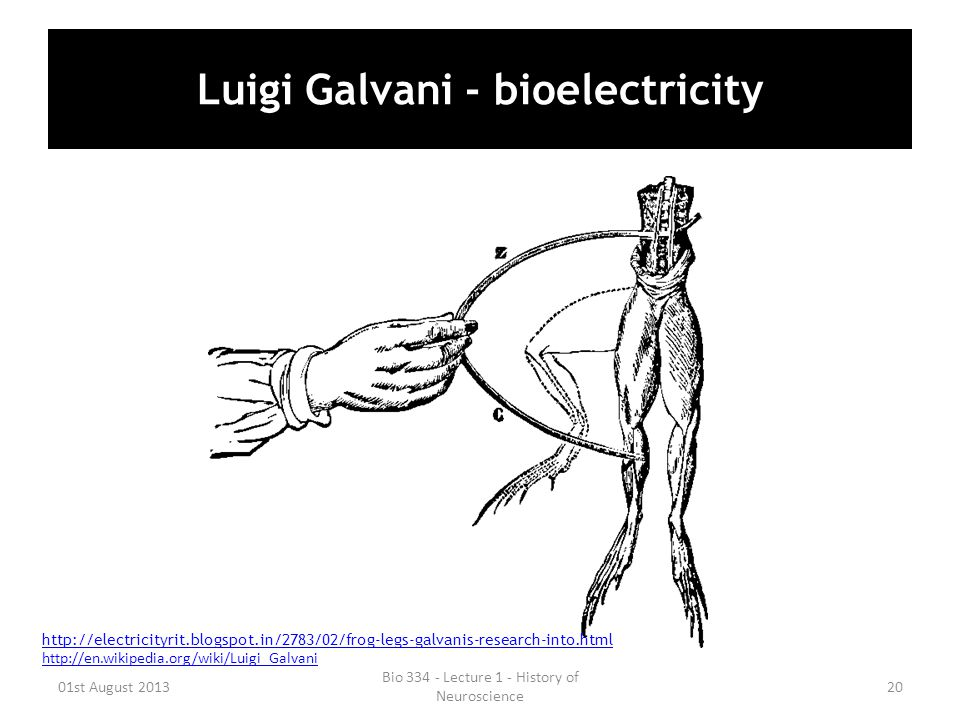 Luigi Galvani - bioelectricity 01st August 2013 Bio 334 - Lecture 1 - History of Neuroscience 20 http://electricityrit.blogspot.in/2783/02/frog-legs-g