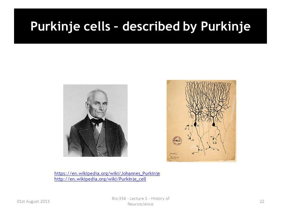 Purkinje cells – described by Purkinje 01st August 2013 Bio 334 - Lecture 1 - History of Neuroscience 22 https://en.wikipedia.org/wiki/Johannes_Purkin