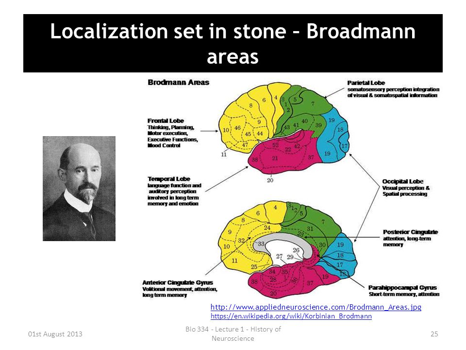 Localization set in stone – Broadmann areas 01st August 2013 Bio 334 - Lecture 1 - History of Neuroscience 25 http://www.appliedneuroscience.com/Brodm