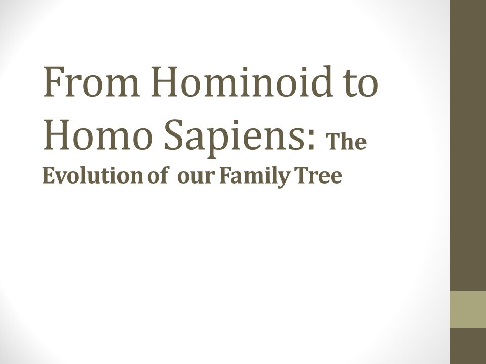 From Hominoid to Homo Sapiens: The Evolution of our Family Tree