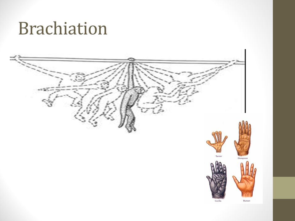 Brachiation