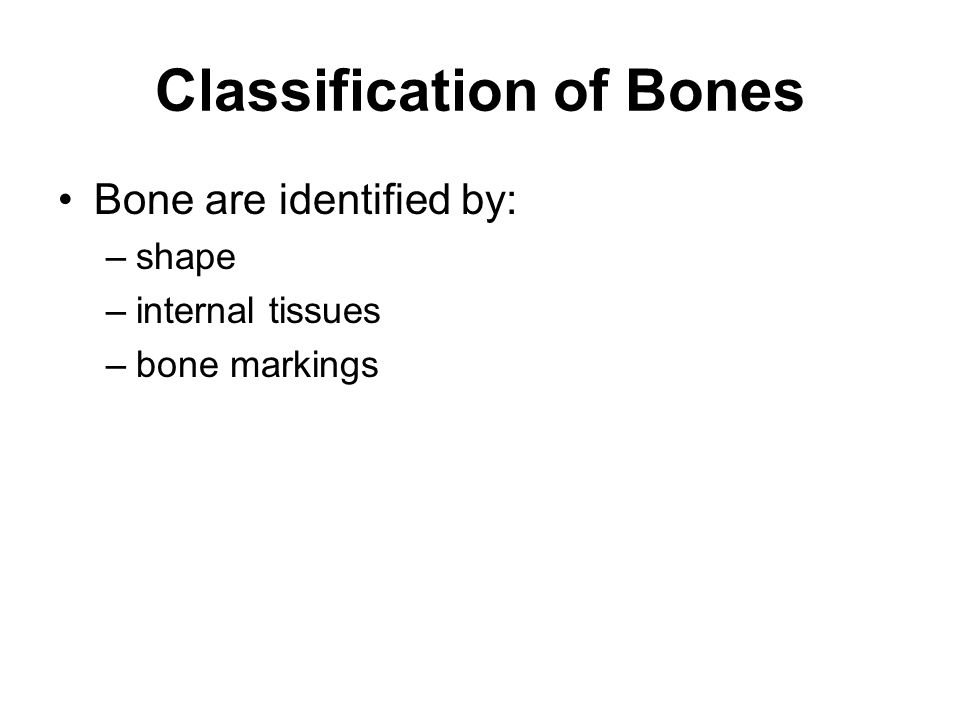 Bone Markings Depressions or grooves: –along bone surface; things run along them Projections: –where tendons and ligaments attach –found at articulations with other bones Holes and Tunnels: –where blood and nerves enter bone