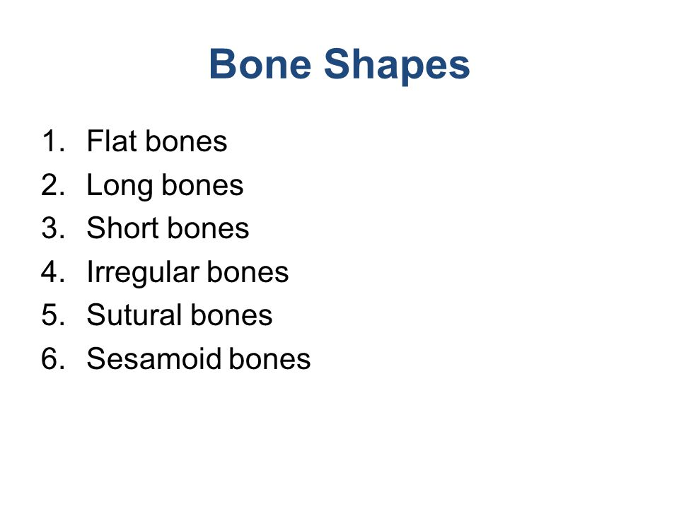 Structure of Long Bone: Diaphysis Figure 6.3c
