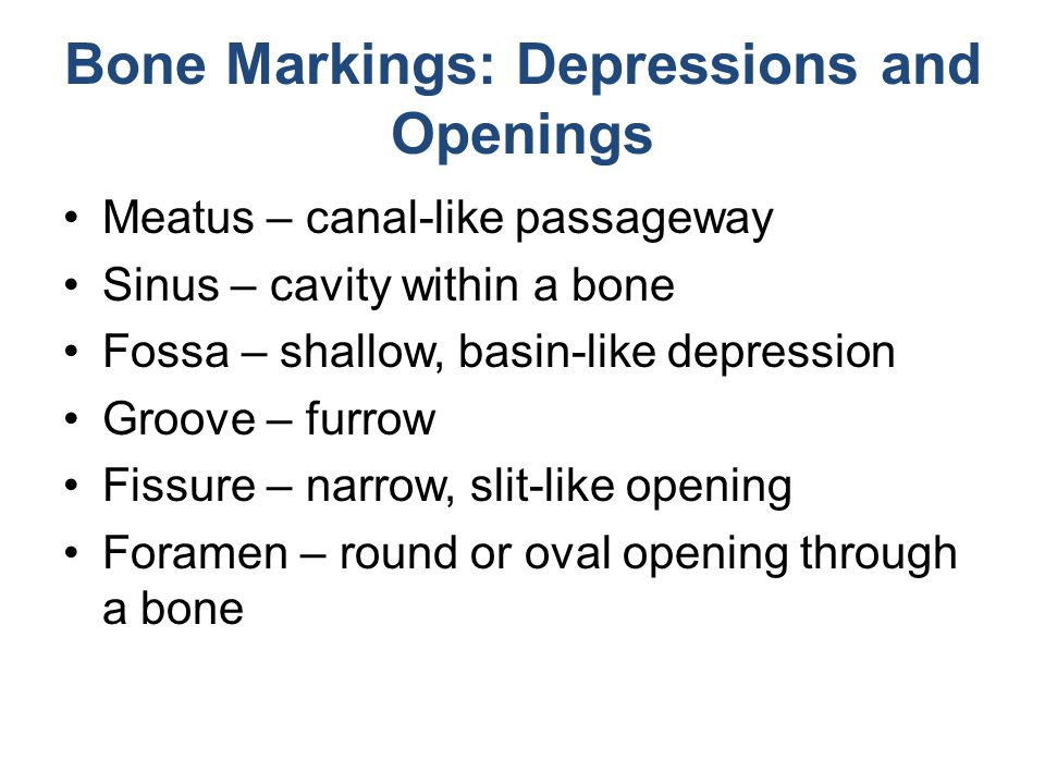 Bone Markings: Depressions and Openings Meatus – canal-like passageway Sinus – cavity within a bone Fossa – shallow, basin-like depression Groove – fu