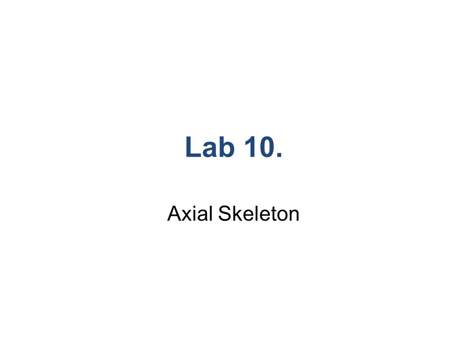 Lab 10. Axial Skeleton