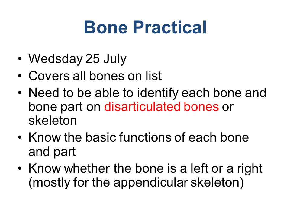Bone Practical Wedsday 25 July Covers all bones on list Need to be able to identify each bone and bone part on disarticulated bones or skeleton Know t