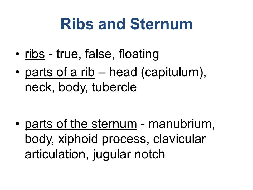 Ribs and Sternum ribs - true, false, floating parts of a rib – head (capitulum), neck, body, tubercle parts of the sternum - manubrium, body, xiphoid