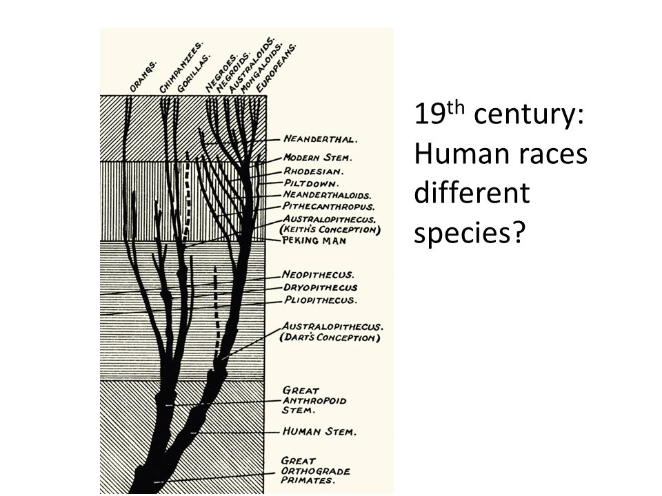 19 th century: Human races different species?