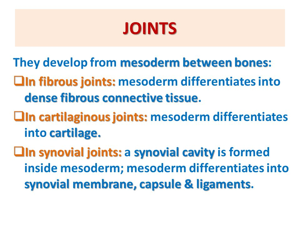 SUMMARY OF DEVELOPMENT OF MUSCLES musclesMESODERMEXCEPT  All muscles develop from MESODERM EXCEPT: 1.Muscles of iris (eyeball) ECTODERM 2.Myoepithelial cells of ECTODERM mammary & sweat glands skeletal muscles myotomes of paraxial mesoderm some head & neck muscles mesoderm of pharyngeal arches  All skeletal muscles develop from myotomes of paraxial mesoderm EXCEPT: some head & neck muscles from mesoderm of pharyngeal arches