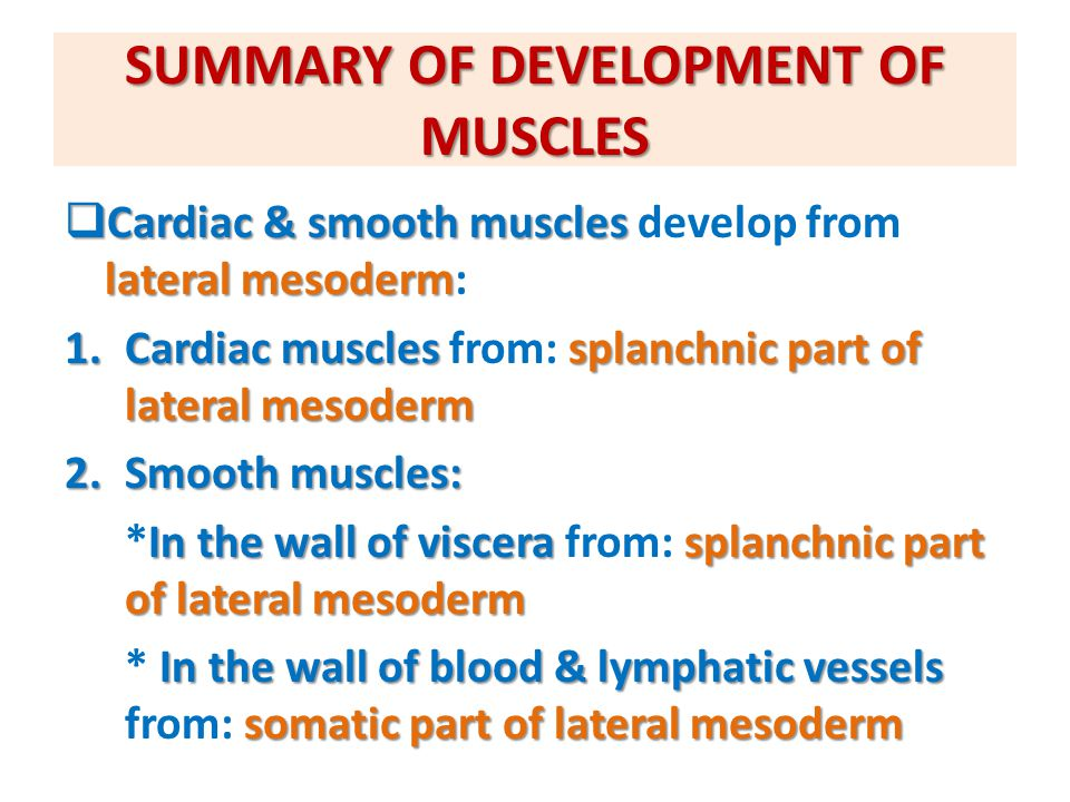 QUESTION 1  Which one of the following group of muscles are derivatives from epaxial division of myotomes.