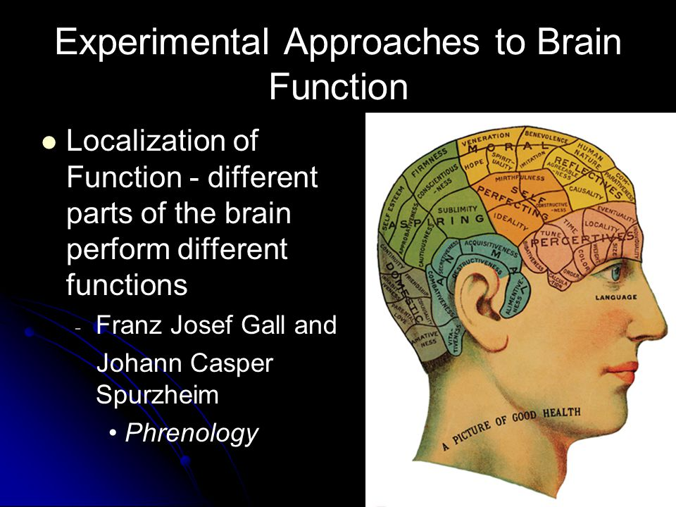 14 Experimental Approaches to Brain Function Localization of Function - different parts of the brain perform different functions - - Franz Josef Gall and Johann Casper Spurzheim Phrenology