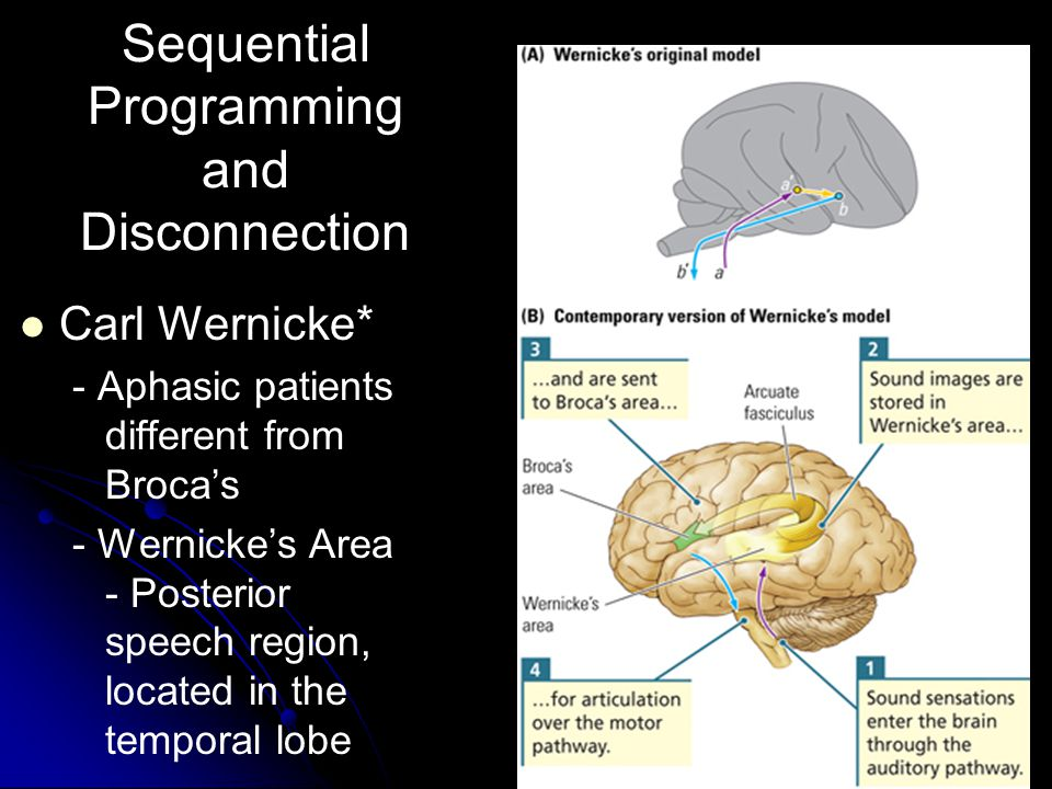 17 Sequential Programming and Disconnection Carl Wernicke* - Aphasic patients different from Broca's - Wernicke's Area - Posterior speech region, located in the temporal lobe
