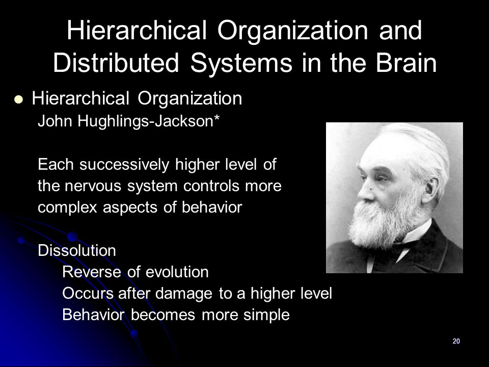 20 Hierarchical Organization and Distributed Systems in the Brain Hierarchical Organization John Hughlings-Jackson* Each successively higher level of the nervous system controls more complex aspects of behavior Dissolution Reverse of evolution Occurs after damage to a higher level Behavior becomes more simple