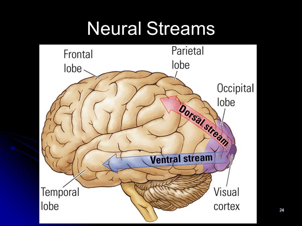 24 Neural Streams