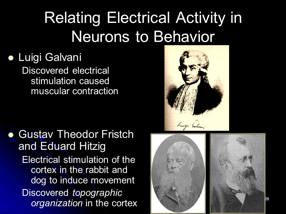 28 Relating Electrical Activity in Neurons to Behavior Luigi Galvani Discovered electrical stimulation caused muscular contraction Gustav Theodor Fristch and Eduard Hitzig Electrical stimulation of the cortex in the rabbit and dog to induce movement Discovered topographic organization in the cortex